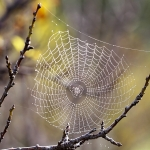 Spider Glue Investigation Yields Smart Materials Insight